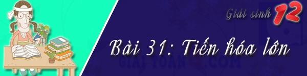 giai bai 31 sinh 12
